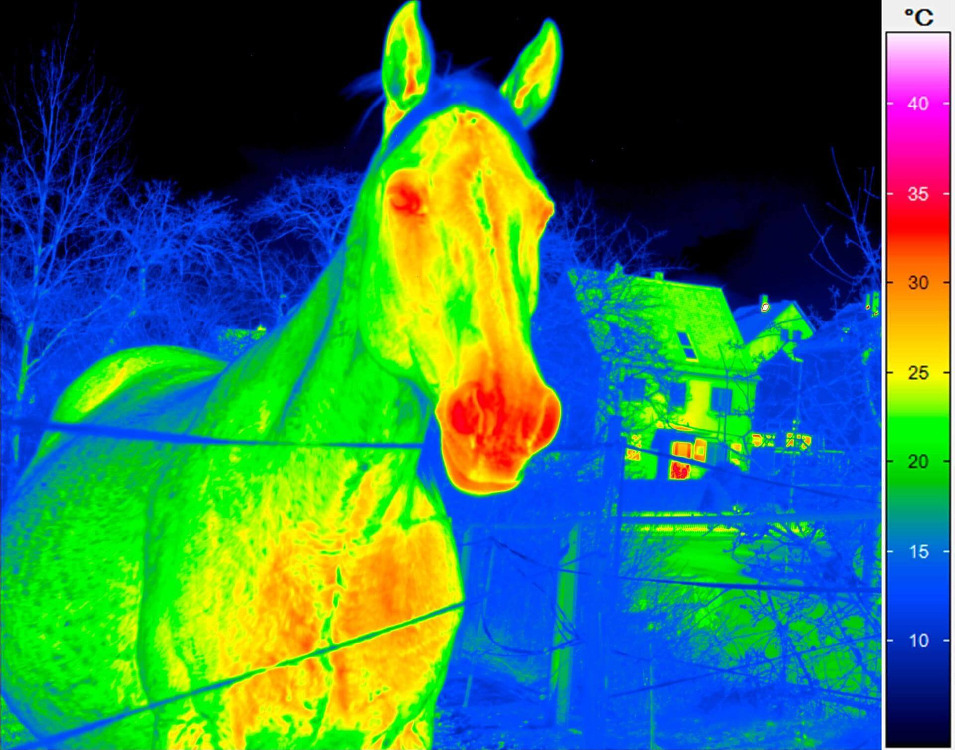 Thermography of a horse